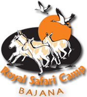 Royal Safari Camp - Bajana